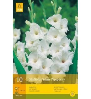 10 Glaïeuls White Prosperity Cal.12/14