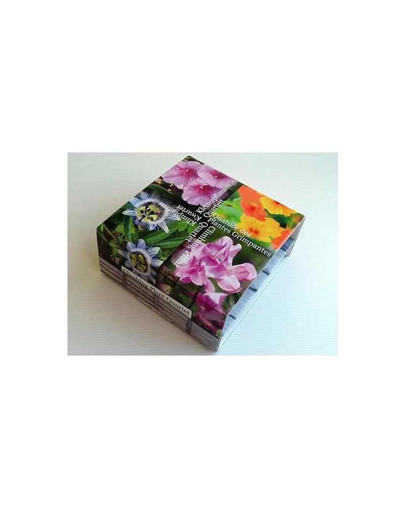 Kit de semis Quatuor de plantes grimpantes