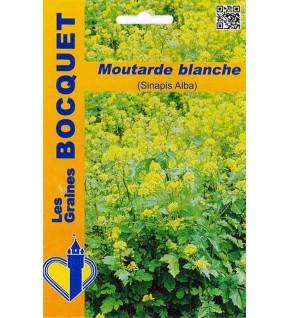 Moutarde blanche (Sinapis Alba)