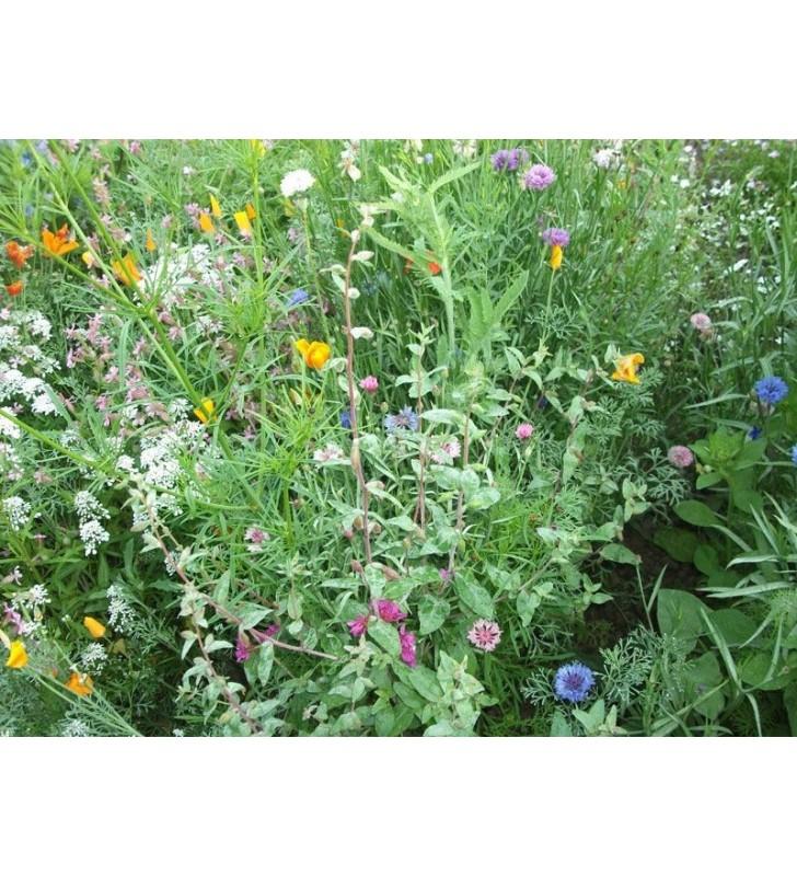 Fleurs en mélange '' Printemps Fleuri '' ( 4 mois de fleurs en mélange )