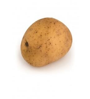 Pomme de terre Laurette