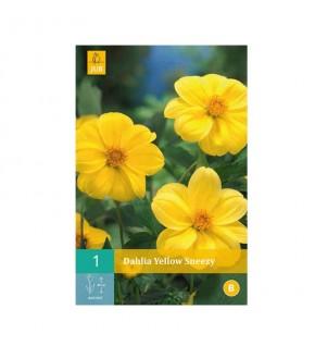 Dahlia yellow Sneezy