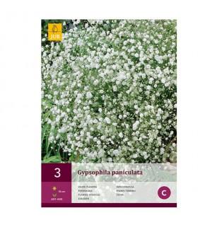 Gypsophile Paniculata (...