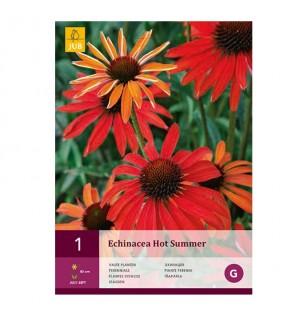 Echinacea hot summer