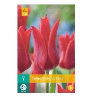 Tulipes Pieter de Leur