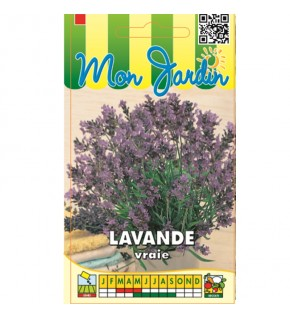 Lavande officinale vivace...