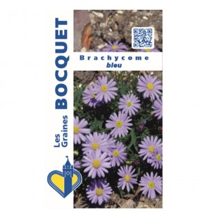 Brachycome bleu