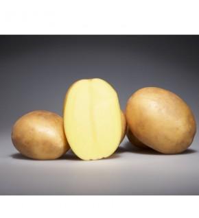 Plants de Pomme de terre...