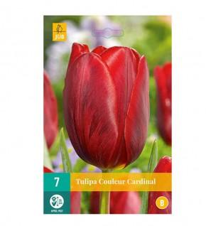 Tulipe Cardinal