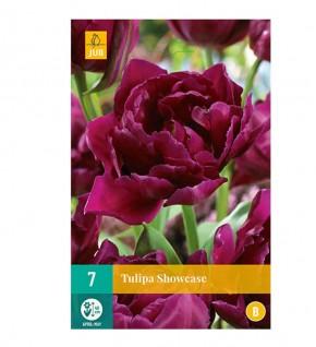 Tulipes Showcase