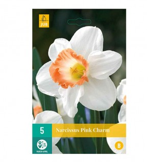Narcisses Pink charm