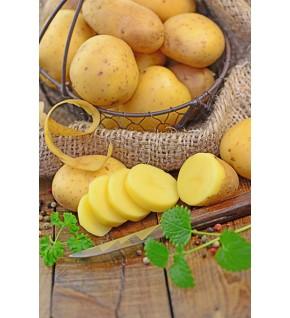 Pomme de terre Blanche 10