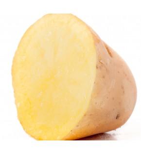 Pomme de terre Etincelle 10...