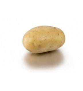 Pomme de terre Artemis