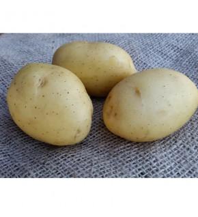 Pomme de terre Vitabella...