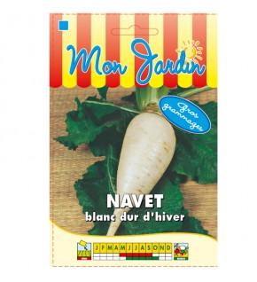 Navet Blanc dur d'hiver-...