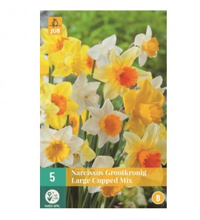 Narcisses coupe large Mix