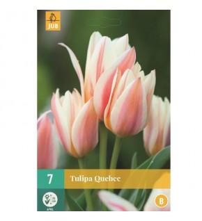 Tulipes Quebec