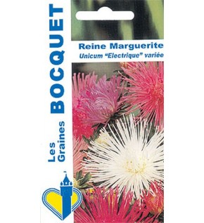 Reine Marguerite Unicum - Electrique variée