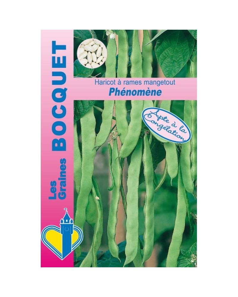 Haricot à rames mangetout Phénomène (Phenomeen) - 100g