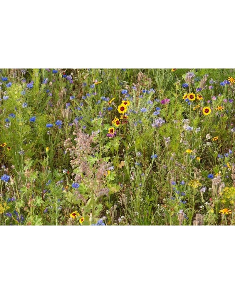 Fleurs Abeilles et Cie
