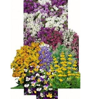 Fleurs parfumées en mélange