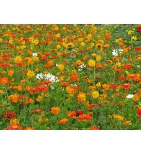 Fleurs Orange Eclair