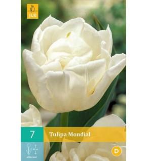 Tulipes Mondial