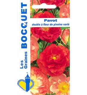 Pavot double à fleur de pivoine varié
