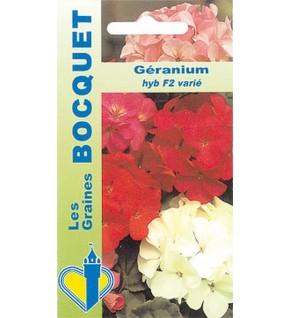 Géranium HYB F2 varié