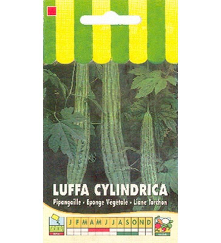 Luffa cylindrica (éponge végétale)