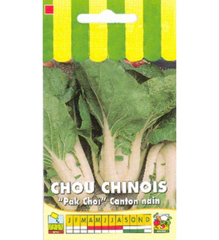 Chou de Chine Canton nain Pak Choi