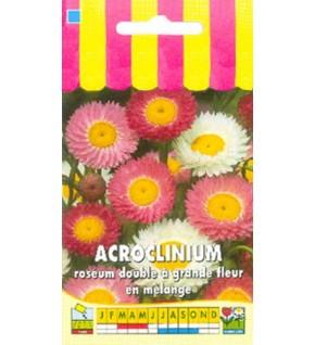 Acroclinium roséum double en mélange