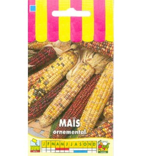 Maïs ornemental en mélange