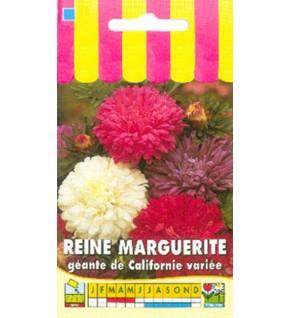 Reine Marguerite géante de Californie variée