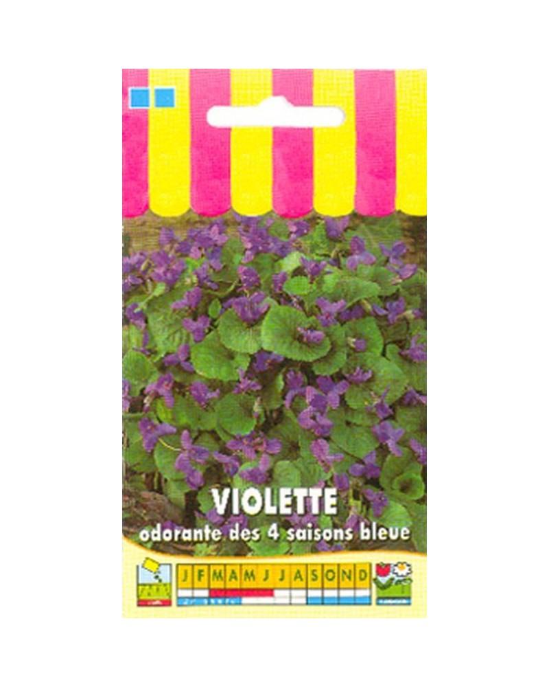 Violette odorante des 4 saisons