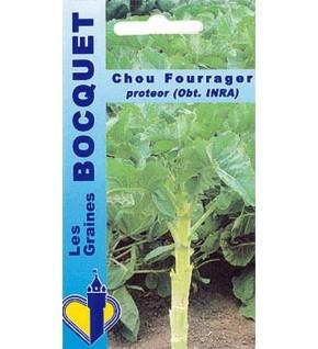 Chou fourrager Protéor (branchu)