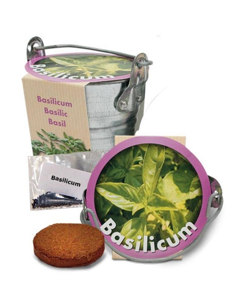 Basilic + pot zinc