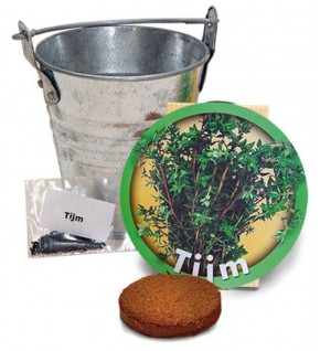 Thym + pot zinc