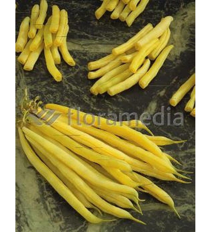 Haricot nain mangetout Beurre Fructidor 70g