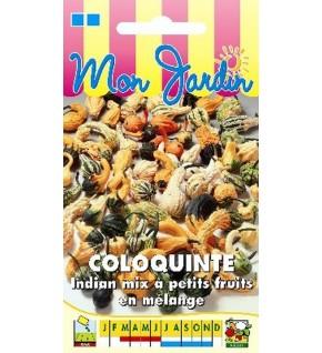 Coloquinte Indian Mix petits fruits