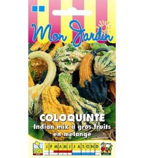 Coloquinte Indian Mix gros fruits