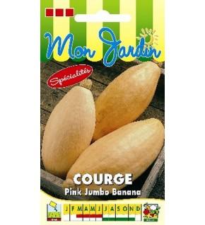 Potiron Pink Jumbo Banana