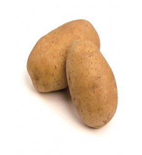 Pomme de terre DITTA Bio
