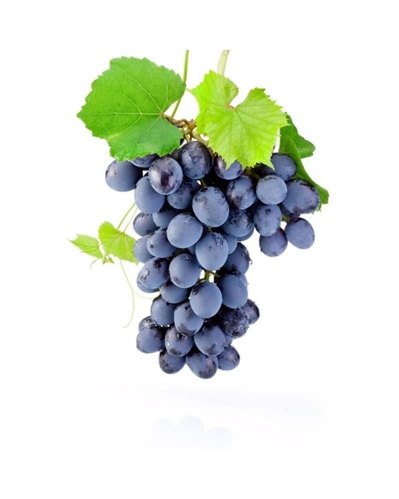 1 vigne à raisin de table noir