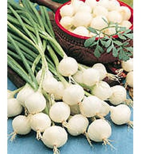 Oignon blanc Snowball Filet de 250g
