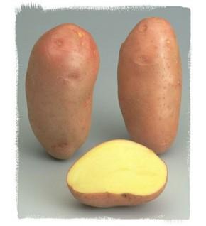 Pomme de terre Rosabelle à peau rouge