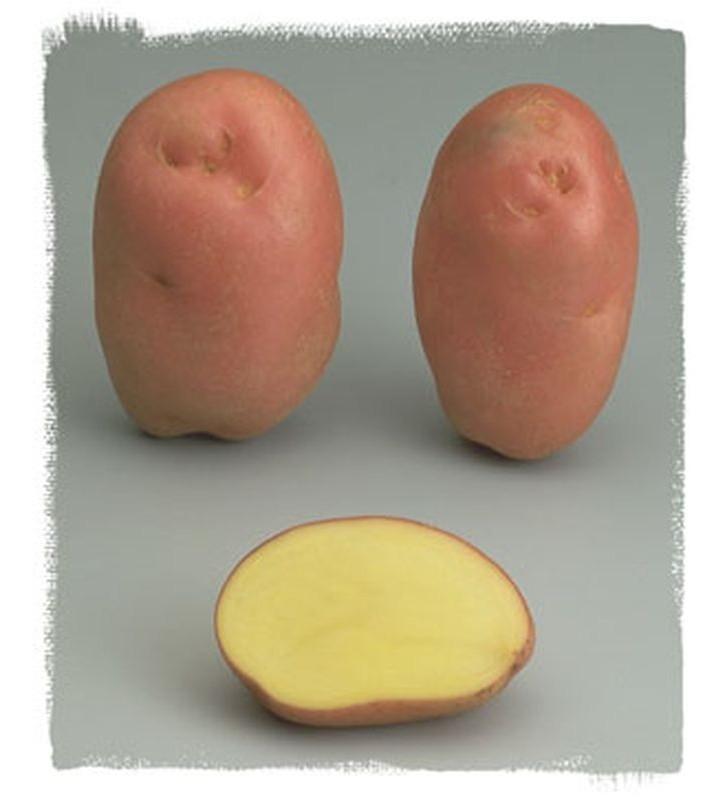 Pomme de terre Désirée à peau rouge certifiés ECOCERT FR-BIO-01
