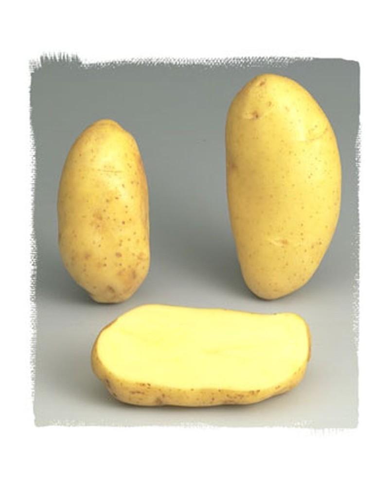 Pomme de terre Spunta