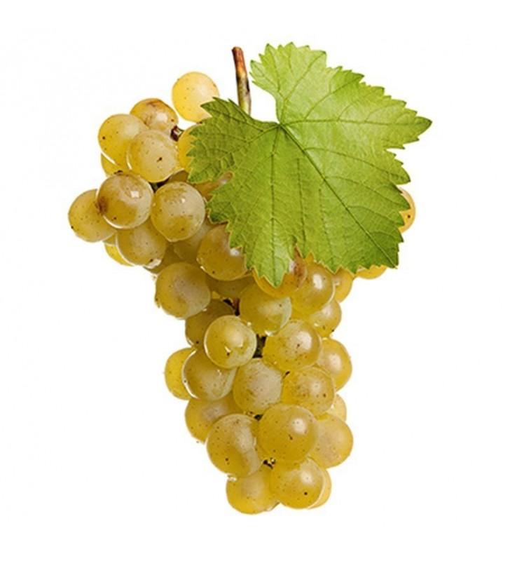 1 vigne à raisin de table blanc